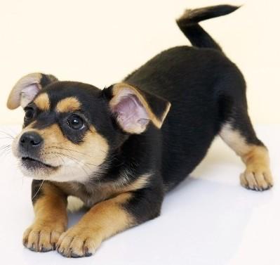 Купить лечебный корм для собак Royal Canin сухой | Диета