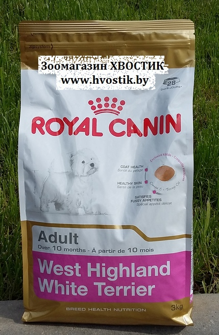 West Highland White Terrier Adult (Вэст хайленд уайт терьер эдалт)