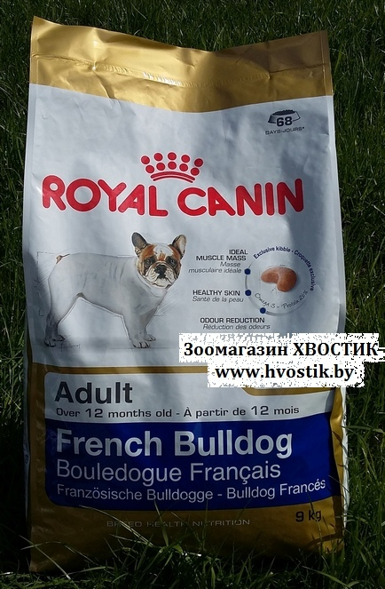 French Buldog Adult (Френч бульдог эдалт)